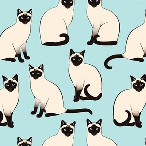 Siamese Cats sparse on light blue