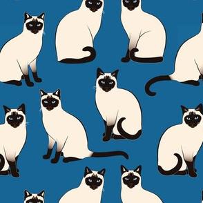 Siamese Cats sparse on dark blue