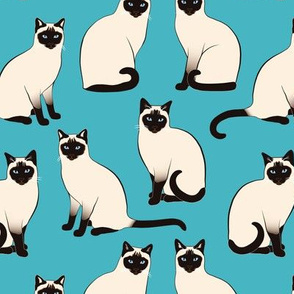 Siamese Cats sparse on turquoise