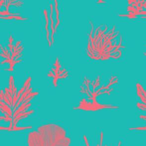 Coral Coral Aqua Pink