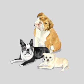 Custom Bruno Bulldog Bella Boston Terrier and Peanut Chihuahua on Silvery Gray