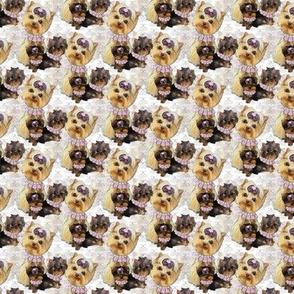 """Yorkie Neutral 2"""" - 3 little puppies"""