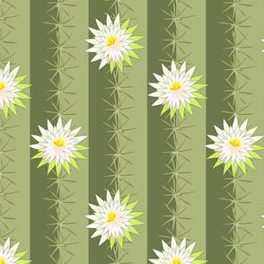 cactus soft green