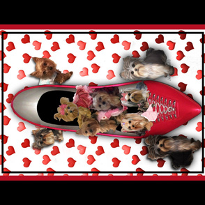 Yorkie Shoe with hearts Quilt Panel