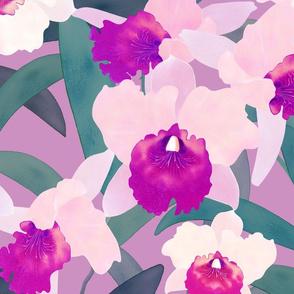 Pink Cattleya on Pink 150