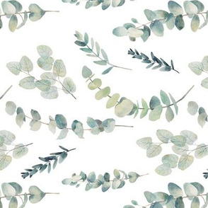 Rotated // Silver Dollar Eucalyptus