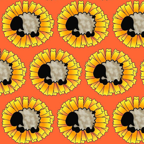 Calendula Sheep