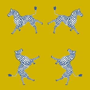 Zebra-gold blues