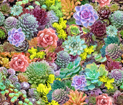 Desert Sunny Succulents  fabric by mypetalpress on Spoonflower - custom fabric