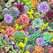 Rdesert_succulents_liter_2_shop_thumb