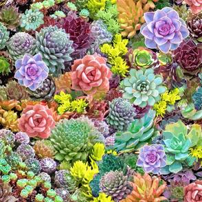 Desert Sunny Succulents