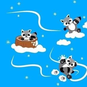 Winter Raccoons