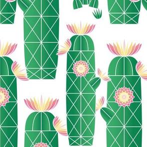 Flowering Desert Cactus