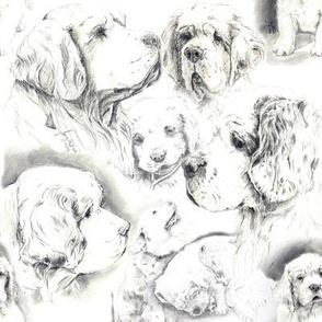 Clumber Spaniel - black & white theme