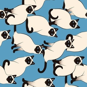 Siamese Cats rotated