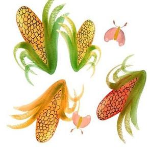 Corn moth