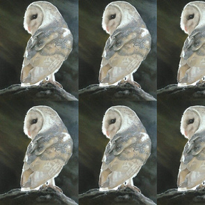 Barn Owl Beauty