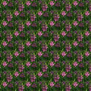 purple daylilies 2ga layers