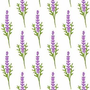 Sprig of Lavender / Purple & green on White