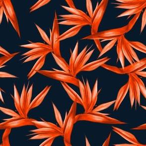 orange birds of paradise
