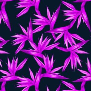purple birds of paradise