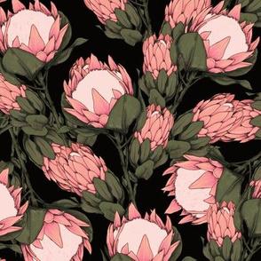 dark proteas pink