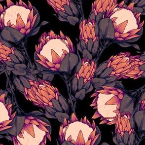 dark proteas