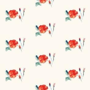 cestlaviv_rose_6x6