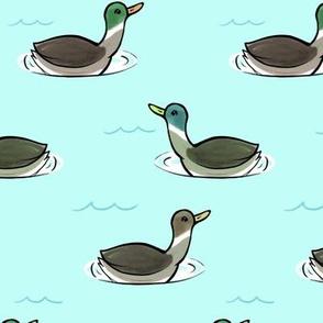 Yangtze ducks