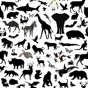 Animal Kingdom - White