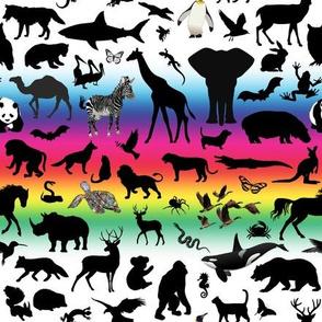 Animal Kingdom - Rainbow, White