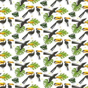 Toucan Play