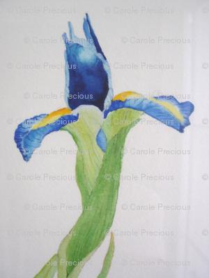 Iris-watercolour-005_preview
