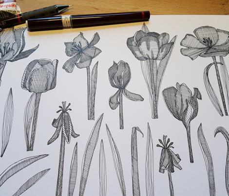 tulip decay black