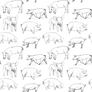 Pigs in Watercolor, Black and White