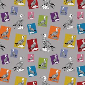 Rpysanky-gannets_shop_thumb