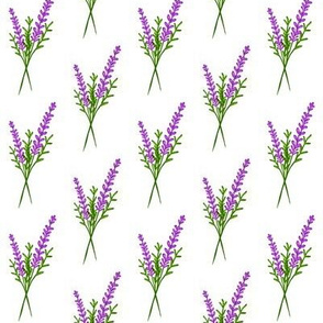Sprigs of Lavender / Purple & green on White