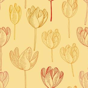Sunshine Desert Tulip.