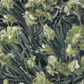narcissus-daffodils-gloom