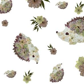 Floral & Hedgies