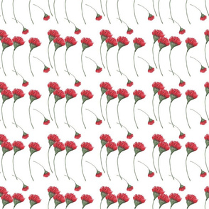 Red Flowers on White