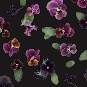 Moody Violas On Charcoal Gray