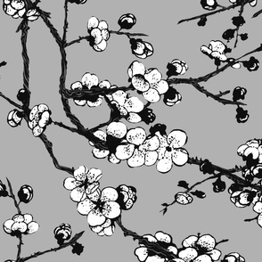 sakura ( Black and white02)