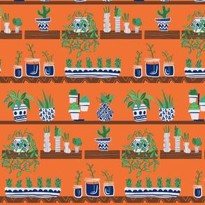 Boho plants on shelf