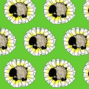 Daisy and Sheep