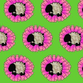Bethsheepflower