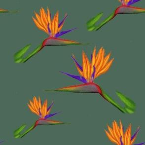 birdofparadise2