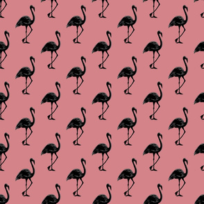 Flamingo 1 Pink Black
