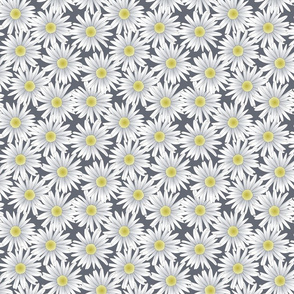 Daisies on Gray Background