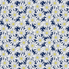 Daisies on a Navy Blue Background